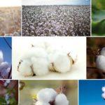 天然繊維~植物性編 綿も麻も色々♪